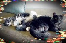 cat1 - Copy