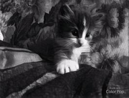 cat5 - Copy