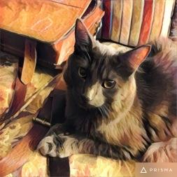 cat6 - Copy